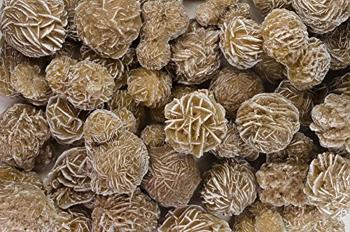 Fantasia Materials: 1/2 lb Gypsum Desert Rose Stones - Avg 8-12 pcs/lb - Raw Rough Natural Selenite Crystals for Cabbing, Cutting, Lapidary, Tumbling, Polishing, Wire Wrapping, Wicca & Reiki - Display Lapidary Agate