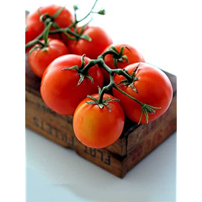New Yorker Tomato 35 Seeds - Bush Beefsteak Type : Vegetable Plants : Garden & Outdoor