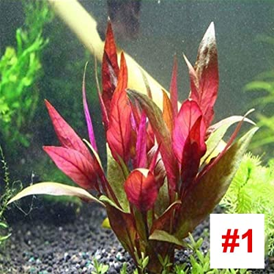 SKAISK Premium Aquarium Aquatic Plant Seeds,1000Pcs/Bag Water Grass Seeds Easy Growing for Home Garden Fish Tanks Decoration: Home & Kitchen