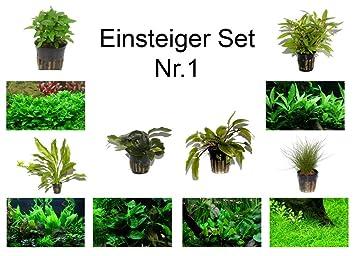 Tropica Einsteiger Set Mit 6 Einfachen Topf Pflanzen
