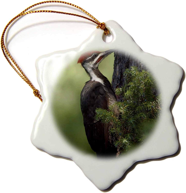 3dRose Pileated Woodpecker Bird, Namakan Island, MN - US24 RKL0026 -. - Ornaments (ORN_91438_1)