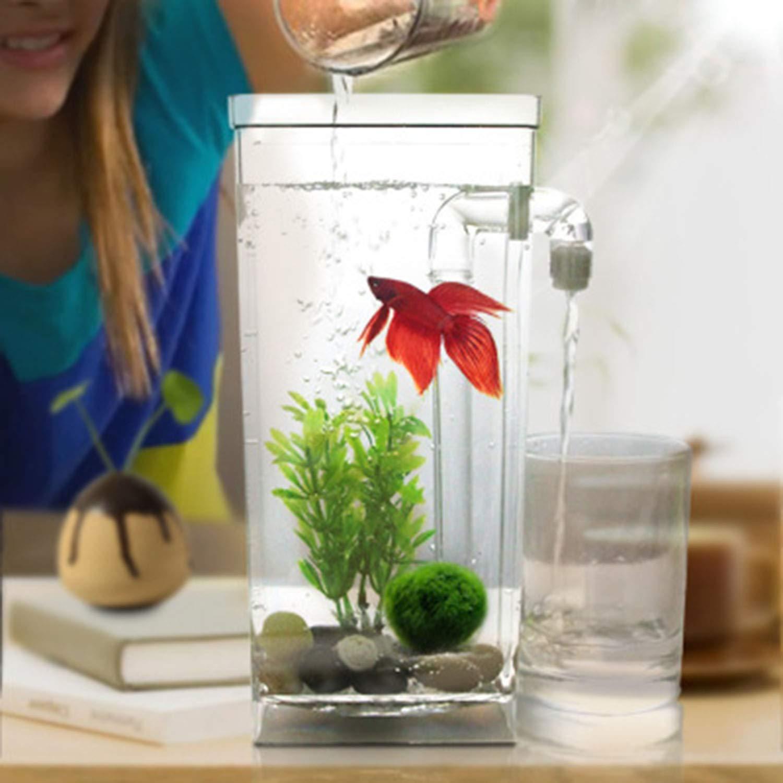 Escritorio Mini Pecera Ecología Creativa Plástica Autolimpiante Cambio De Agua Libre Acuario Pequeño,1Pcs,Square: Amazon.es: Hogar
