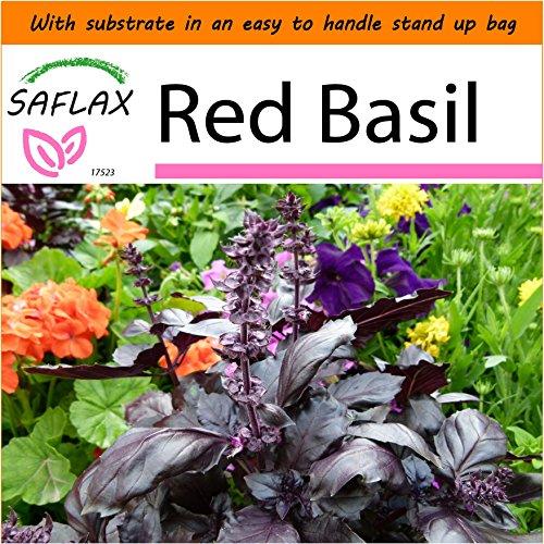 Basil Garden In A Bag - 8