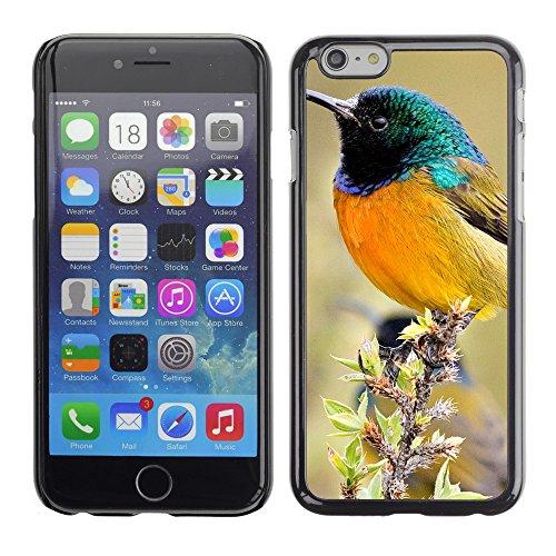"""Premio Sottile Slim Cassa Custodia Case Cover Shell // V00003152 oiseau coloré // Apple iPhone 6 6S 6G PLUS 5.5"""""""