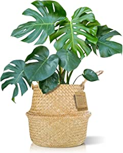Plant Baskets, Extra Large Woven Basket Planter for Indoor Plants, Decorative 13 Inch Seagrass Basket with Handles, Ideal for Home Decor, Storage, Organization (X-Large, 13.4
