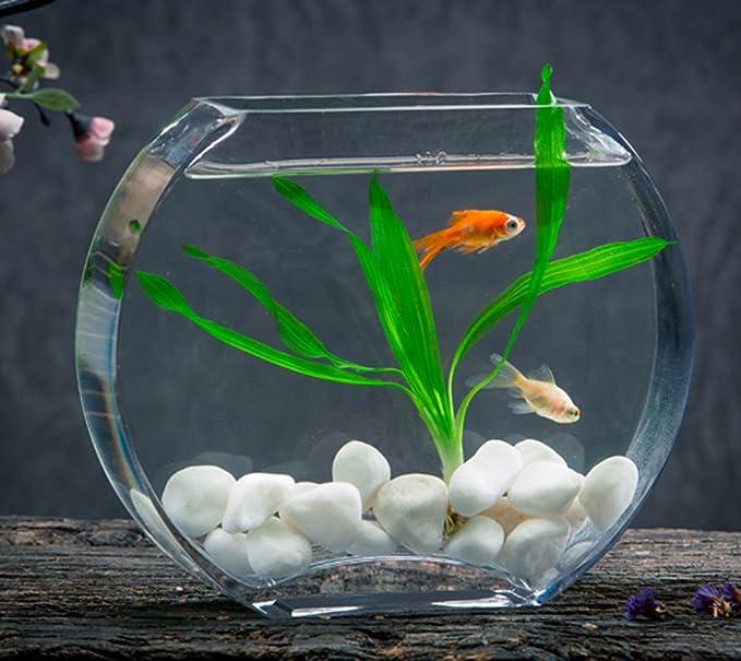 Impresionante pecera obelada fina para 3-4 peces para que esten como en casa!