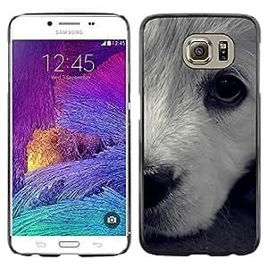 Paccase / SLIM PC / Aliminium Casa Carcasa Funda Case Cover - White Terrier Havanese Dog Puppy - Samsung Galaxy S6 SM-G920