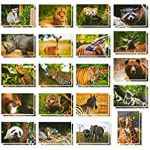 Wild Animal Postcards – 40 Postcards – Bulk Set - Featuring Tigers, Bears, Giraffes, Elephants, & More – 4 x 6 Inches