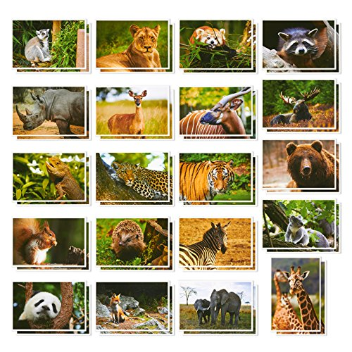 Wild Animal Postcards - 40 Postcards - Bulk Set - Featuring Tigers, Bears, Giraffes, Elephants, & More - 4 x 6 Inches