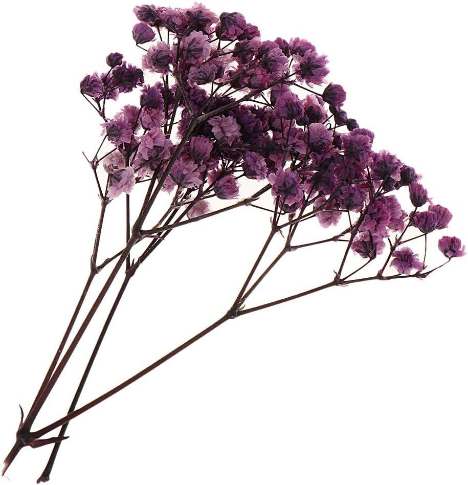 Amarillo F Fityle Te/ñido Hojas Prensadas Flores Naturales Secas para DIY Adornos de /Álbum de Foto