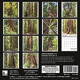 Search : California Redwoods Calendar 2018