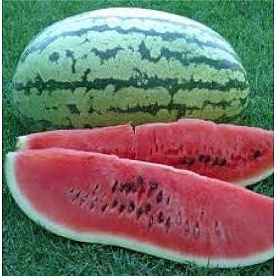 30 Seeds Watermelon Striped Klondike Blue Ribbon AB047 : Garden & Outdoor