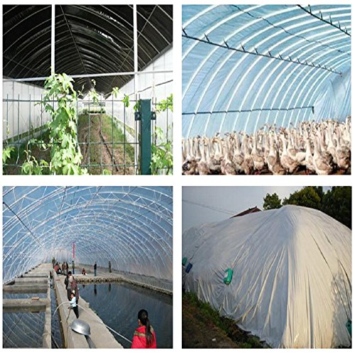 OriginA Clear Plastic Film Polyethylene Covering for Greenhouse and Grow Tunnel,6mil 16x100ft by OriginA (Image #2)