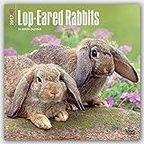 Lop-Eared Rabbits 2017 Square