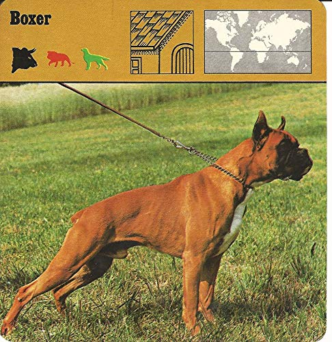 1975 Editions Rencontre, Animals Card, 11.258 Boxer, Dog
