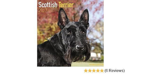 Calendrier 2017 SCOTTISH TERRIER