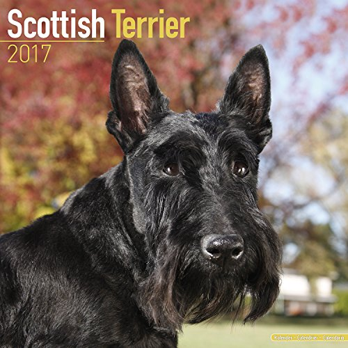 Used, Scottish Terrier Calendar 2017 - Dog Breed Calendars for sale  Delivered anywhere in USA