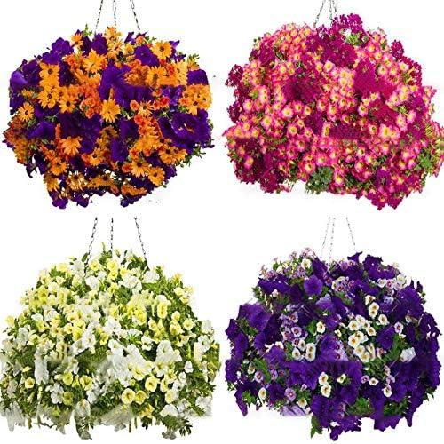 100 Unids/pack Semillas de Flor de Morning Glory Semillas de ...