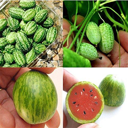10pc Cucamelon Mini Watermelon Red Mini Seeds Fruit Plant Home Garden Decor