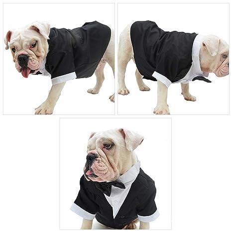 DANMEI - Traje de baño para Perro, Mascota, Perro, Perro, Traje de ...