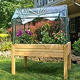 Eden Mini Greenhouse Review