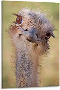A Cute Ostrich Poster Canvas Art Poster and Wall Art Painting Print Modern Family Bedroom Decor (Framed,12x18 inch)