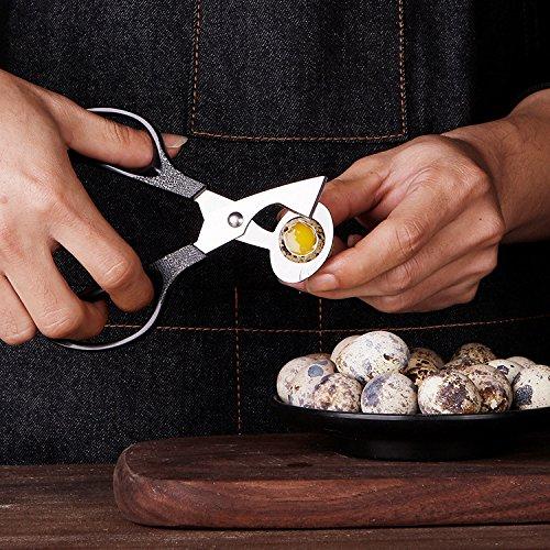 Pigeon Quail Egg scissor Bird Cutter Opener Kitchen Tool Clipper Cigar Cracker (Texturizing Clipper Blade)
