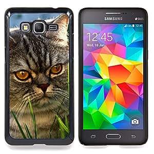 """Yellow Cat Eyes Mestizo gris enojado"""" - Metal de aluminio y de plástico duro Caja del teléfono - Negro - Samsung Galaxy Grand Prime G530F G530FZ G530Y G530H G530FZ/DS"""
