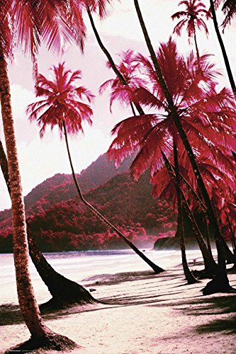 (Culturenik Red Palm Trees Along The Beach Decorative Tropical Scenic Travel Photography Poster Print 24x36)