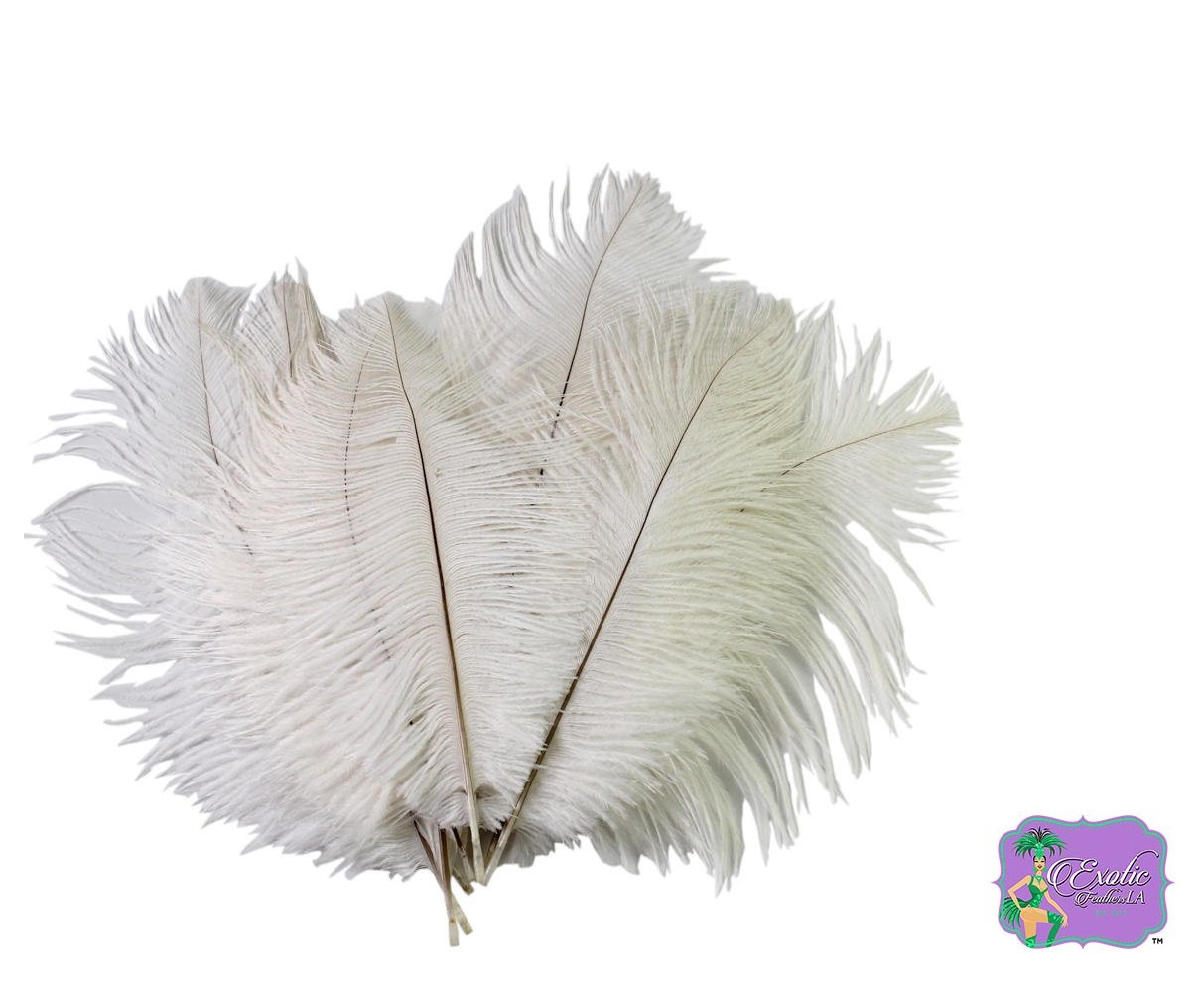 Special Sale OSTRICH Feathers Wholesale Bulk 15/18'' long DELUXE TAIL PLUME Feathers Bleach White Qty 100 by ExoticFeathersLA (Image #1)