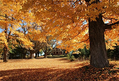 CSFOTO 7x5ft Background for Autumn Scenery Photography Backdrop Fallen Leaves Tree House Sunshine Village Park Fall Landscape Outdoors Holiday Vacation Travel Tour Studio Props (Village Of Park Forest Halloween)