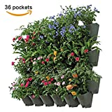Worth Garden SELF WATERING TECHNOLOGY VERTICAL Wall Hangers with Pots - Wall Plant Hangers - Each Wall Mounted Hanging Pot has 3 Pockets - 36 Total Pockets in this Set - BEST Self Watering Planter Set