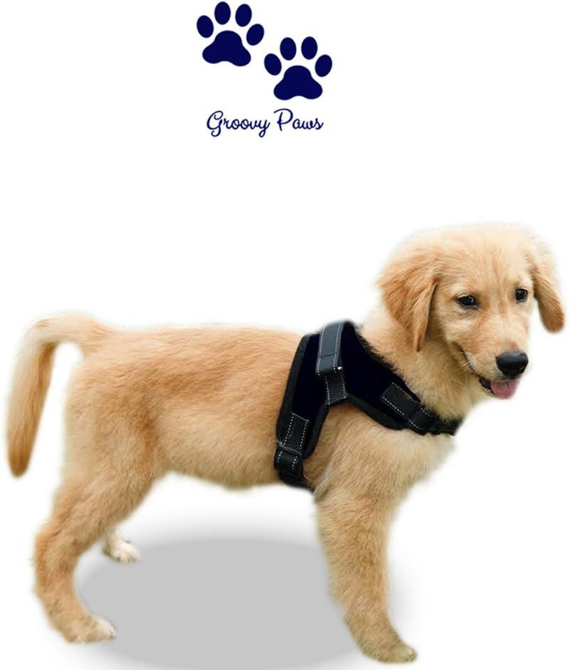 gilet r/églable ext/érieur r/églable danimal familier de No-Pull avec la poign/ée Harnais de chien de pattes de Groovy Moyen gilet rembourr/é de corps pour le grand chien