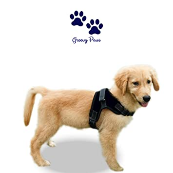 GroovyPaws - Arnés para perro que no tire reflectante, ajustable, para perro o collar