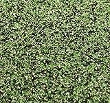 Meyer Imports Green Moss - Dark Fusion Glitter - 1 Kilo - DF90 - MossGN
