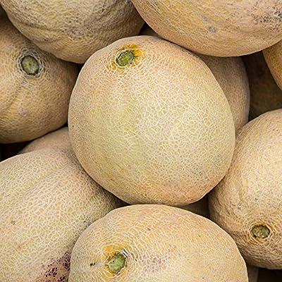 Cantaloupe Melon Garden Seeds - Burpee Hybrid - Non-GMO, Vegetable Gardening Seeds - Fruit