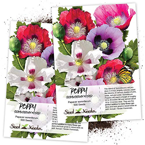 Papaver Somniferum Poppy Seeds - Seed Needs, Single Mixed Poppy (Papaver Somniferum) Twin Pack of 500 Seeds Each