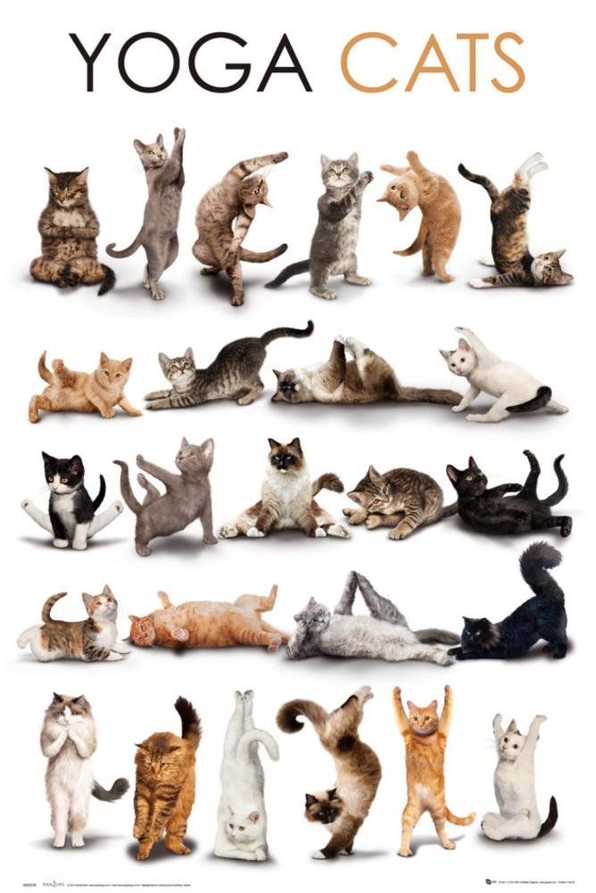 YOGA CATS Poster 24 x 36in by Imaginus Posters: Amazon.es ...