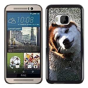 TopCaseStore / la caja del caucho duro de la cubierta de protección de la piel - Alaskan Malamute Border Collie Dog - HTC One M9