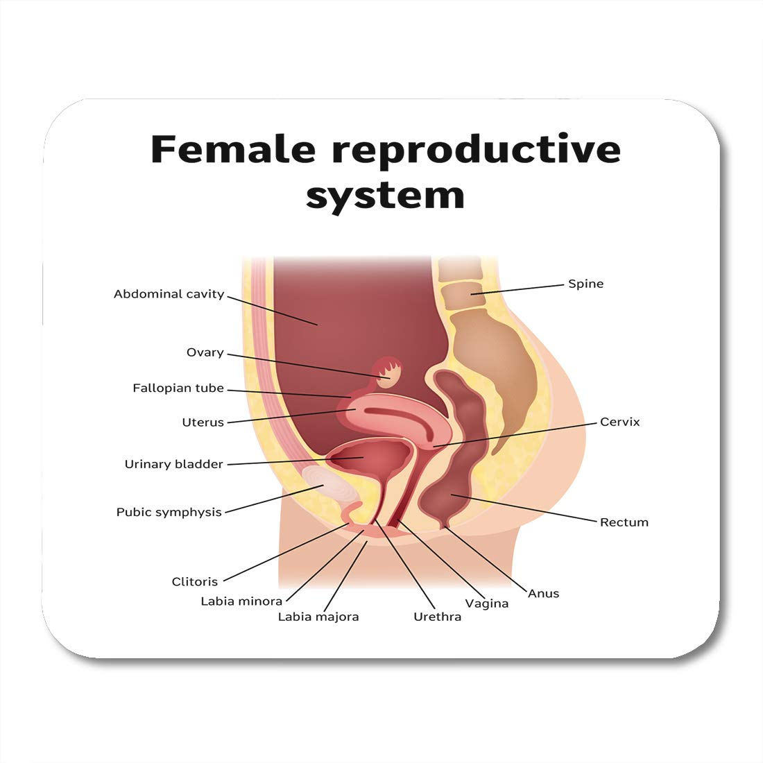 Amazon Emvency Mouse Pads Uterus Female Internal Genital