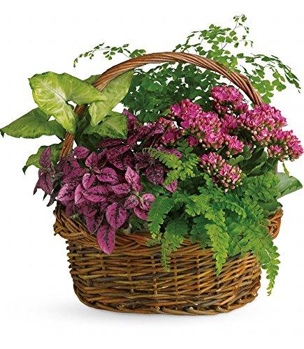 Chicago Flower Co. - Secret Garden Basket - Fresh and Hand Delivered
