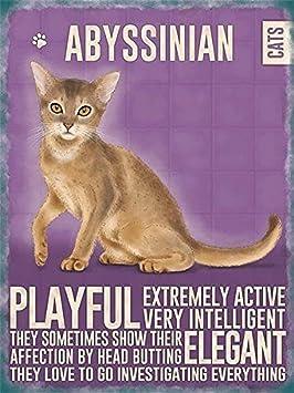 Imán para nevera, de la gama Moggies, selección de razas de gato, Abyssinian: Amazon.es: Hogar