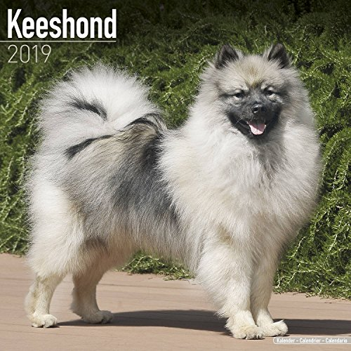 Keeshond Calendar 2019 - Dog Breed Calendar - Wall Calendar 2018-2019