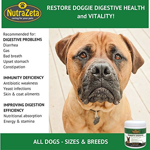 Cheapest Premium Probiotics for Dogs 90 soft Chews 4Bill CFUs 2 chews for Immune System Boost Relief of Diarrhea Gas Bad Breath Yeast pores and skin Itching 6 natura Digestive Enzymes for superior Digestion Check this out