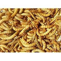 Mehlwürmer - lebend 500g