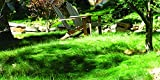 Sheep Fescue Grass (25 LBS)