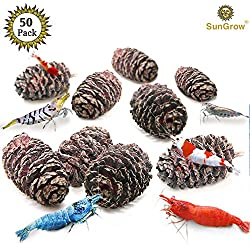 SunGrow 50 Naturally Grown, Pesticide-Free Alder Cones for Shrimps - Lowers pH Level, Fight Bacteria and Prevent Fungal Infections in Aquatic Environment - Perfect for Both Big & Small Aquariums