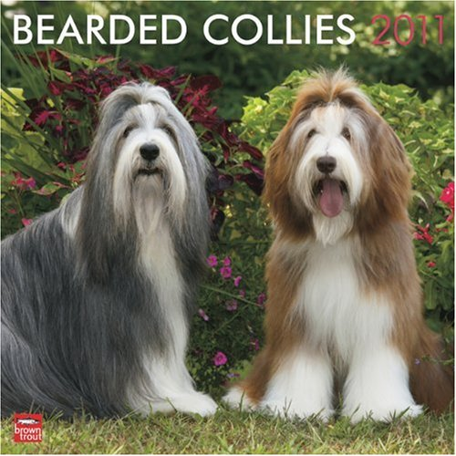 2010 Wall Collie Calendar - Bearded Collies 2011 Square 12X12 Wall Calendar (Multilingual Edition)