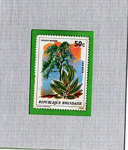 (Framed Postage Stamp Mini-Art Cape Holly Plant)