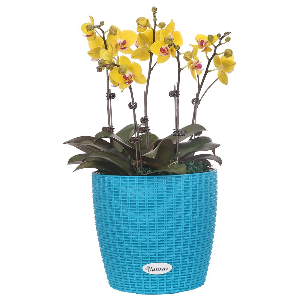 YANXUS Self-Watering Planter Pot Planters Basket – Modern Decorative Planter Pot for Outdoor or Indoor Garden Blue